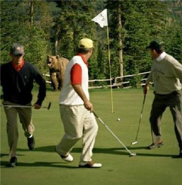Golfbear