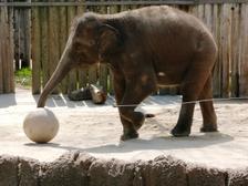Zoo12_2