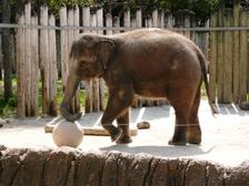 Zoo13_2